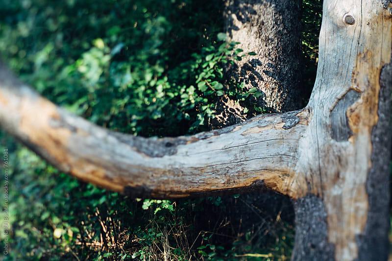 Tree branch by Gabriel (Gabi) Bucataru for Stocksy United
