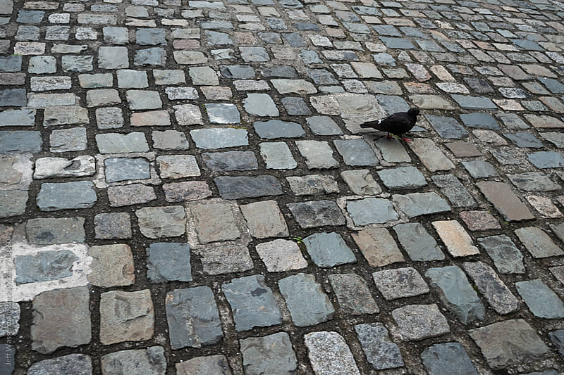 Pigeon Crossing Cobblestone Square by Jeff Wasserman for Stocksy United