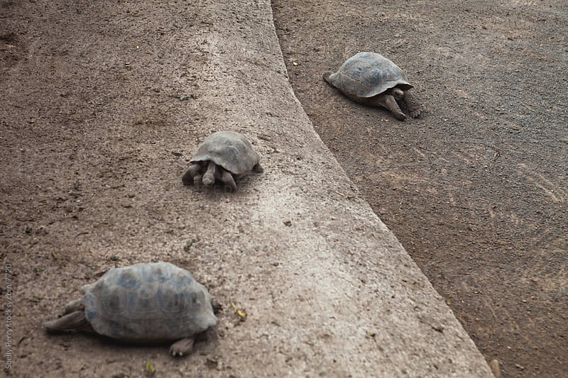 Tortoise Nursery  by Shelly Perry for Stocksy United