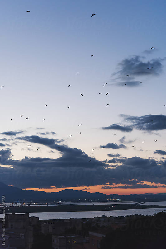 Birds flying at sunset over the city by Luca Pierro for Stocksy United