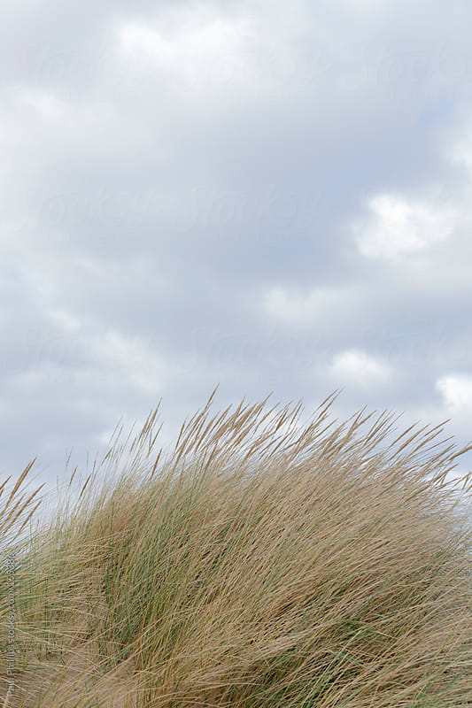 Beach grass on a rounded sand dune against a light cloudy sky by Paul Phillips for Stocksy United