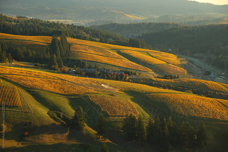 Aerial view of vineyards in fall by Daniel Hurst for Stocksy United