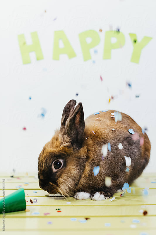 Cute Bunny during a Party by Mauro Grigollo for Stocksy United