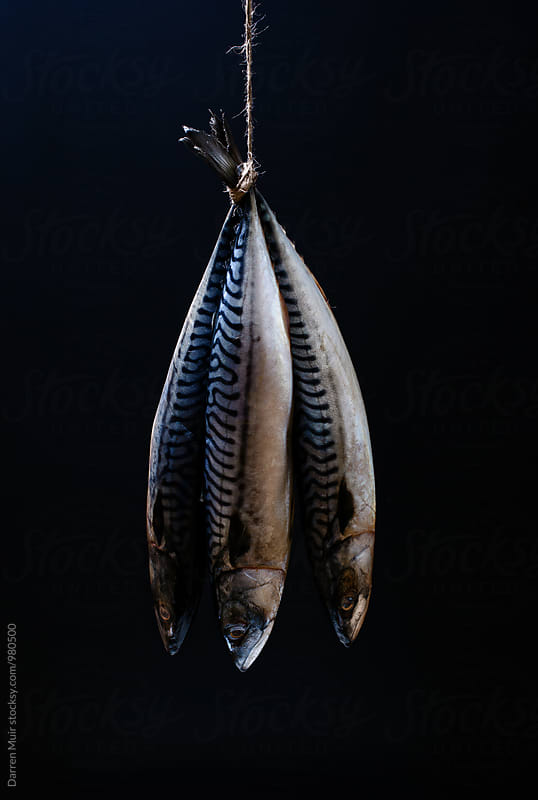 Mackerel. Three mackerel fish hanging from a piece if twine. by Darren Muir for Stocksy United
