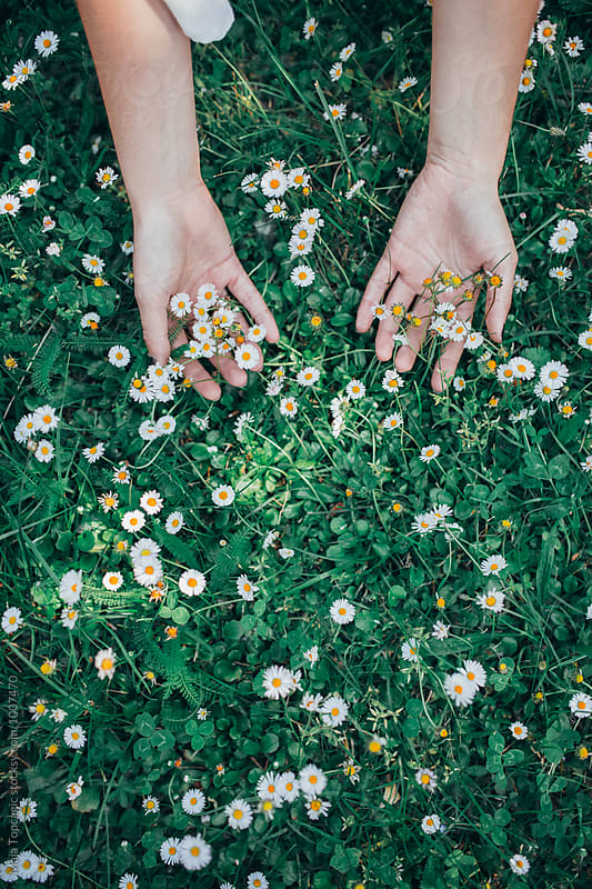 Hands in daisies by Maja Topcagic for Stocksy United