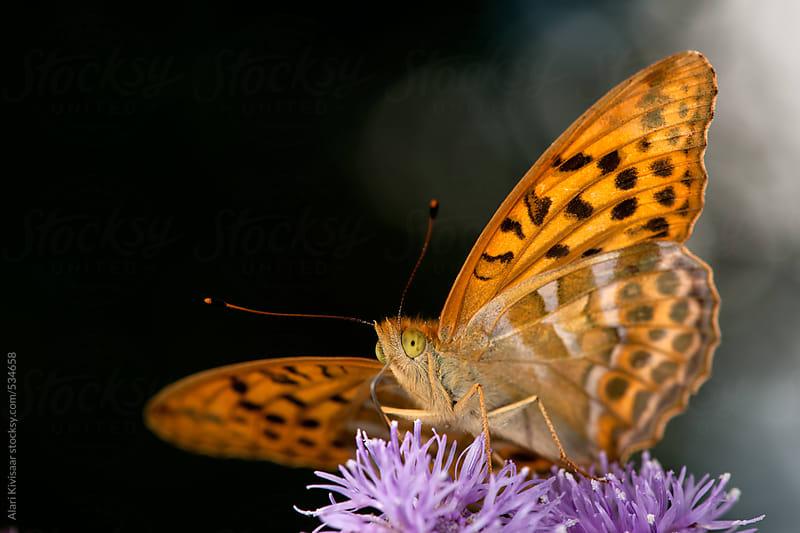 Butterfly by Alari Kivisaar for Stocksy United