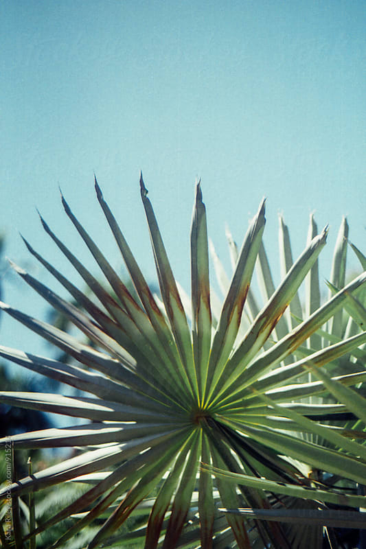 Palm Tree by Kara Riley for Stocksy United