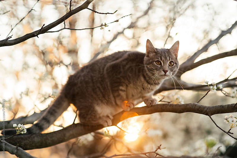 Kitty climbing a tree by Melanie DeFazio for Stocksy United