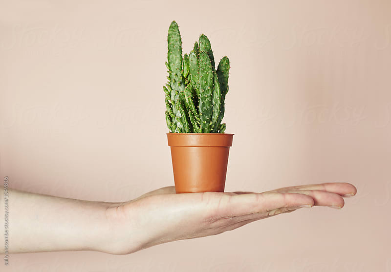 Hand holding a cactus plant by sally anscombe for Stocksy United