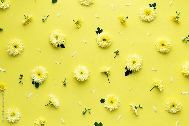 Yellow flower background by Ruth Black for Stocksy United