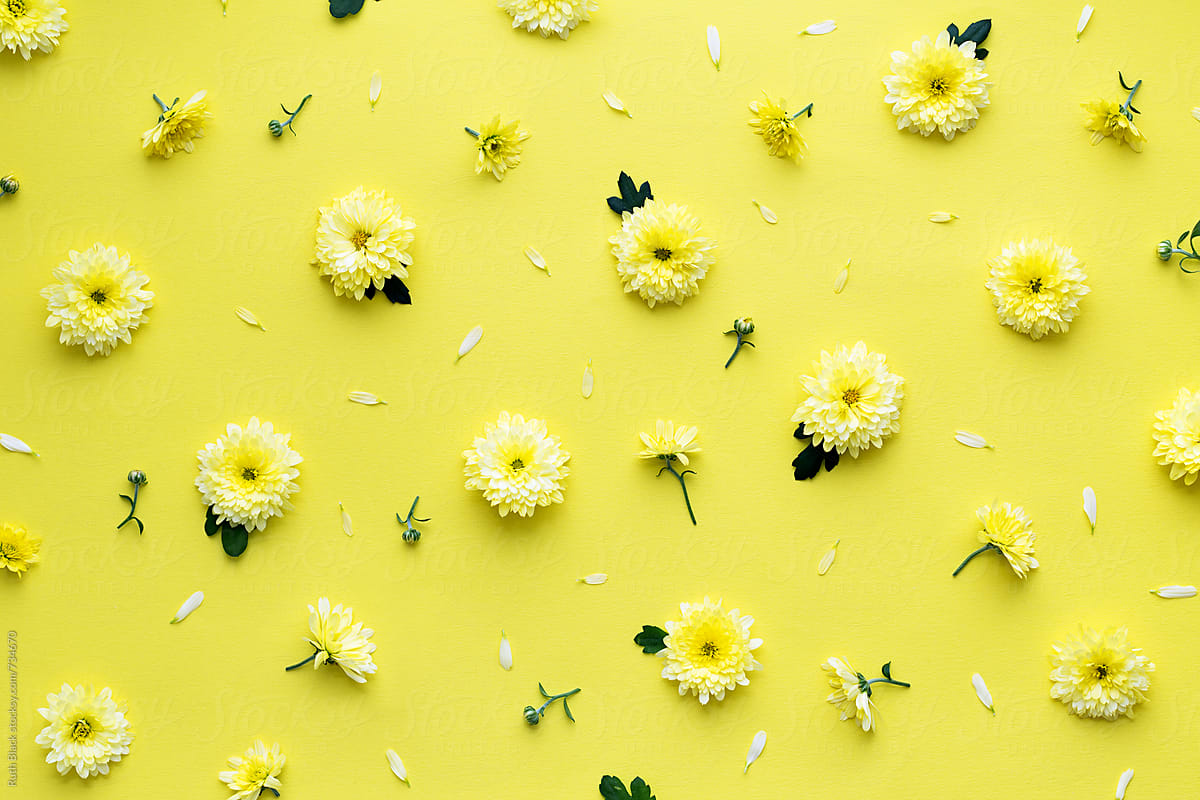 Yellow Flower Background By Ruth Black Flower Background