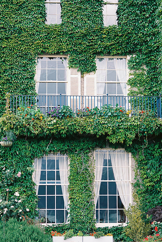 beautiful windows with balcony  with vines by Léa Jones for Stocksy United