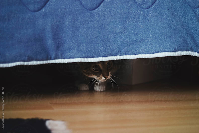 Cute little cat is hiding under the bed by Jovana Rikalo for Stocksy United