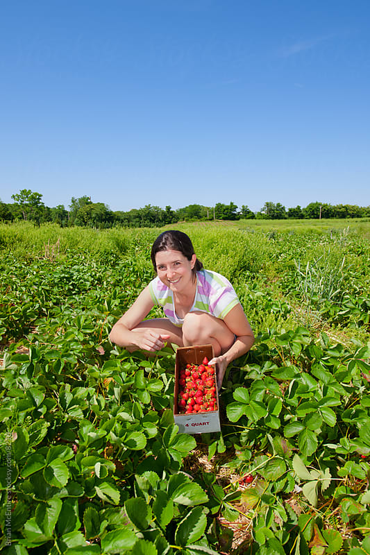 Woman Picking Strawberries at the Strawberry Patch by Brian McEntire for Stocksy United