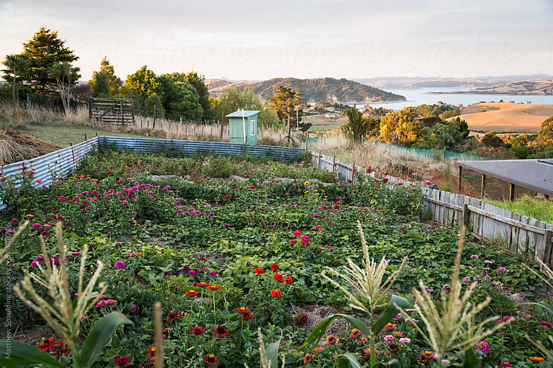 Local sustainable farming plot with flowers by Matthew Spaulding for Stocksy United