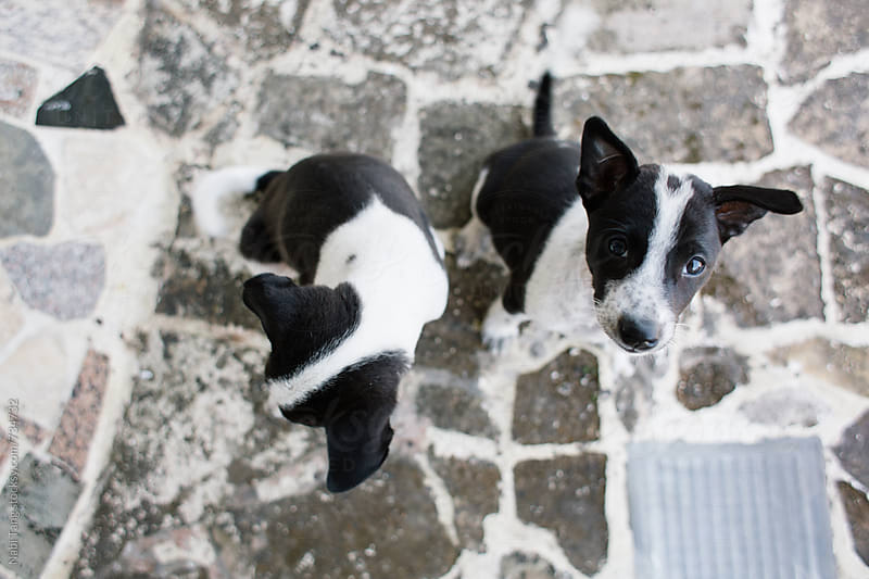 2 cute little puppies by Nabi Tang for Stocksy United