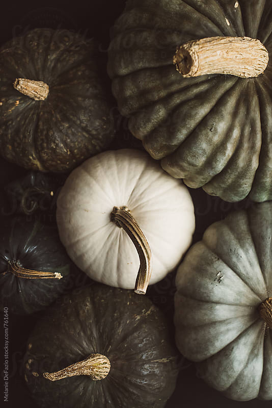 rustic pumpkins by Melanie DeFazio for Stocksy United
