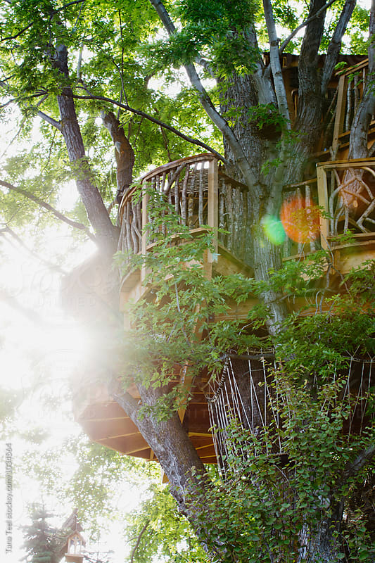 sun shining through trees around tree house by Tana Teel for Stocksy United