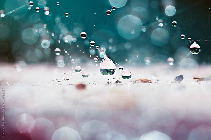 Suspended droplets after the rain by Carolyn Lagattuta for Stocksy United