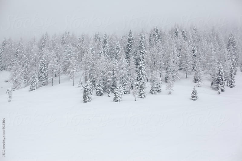 Forest Winter Landscape with Snow by HEX. for Stocksy United