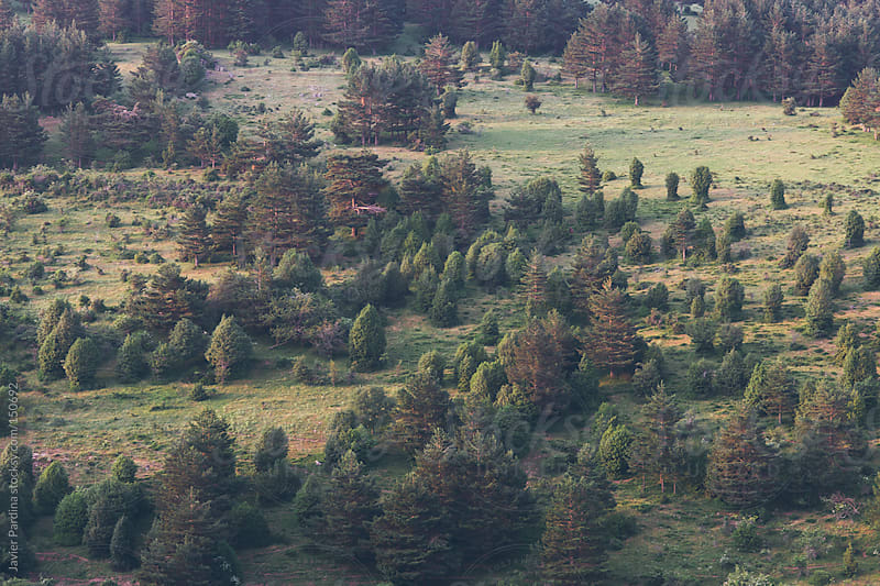 Aerial view of Spanish forests by Javier Pardina for Stocksy United