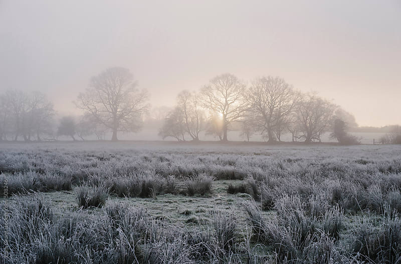 Foggy sunrise over a frosty rural scene. by Liam Grant for Stocksy United