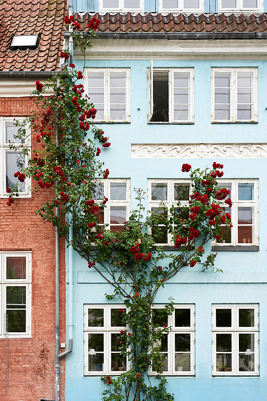 Painted blue facade with beautiful flowers by Trent Lanz for Stocksy United
