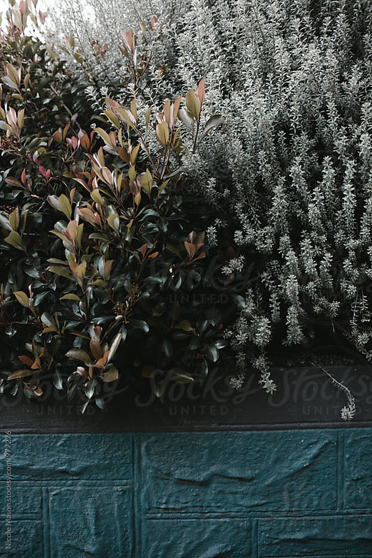 light green shrubs in garden by Nicole Mason for Stocksy United