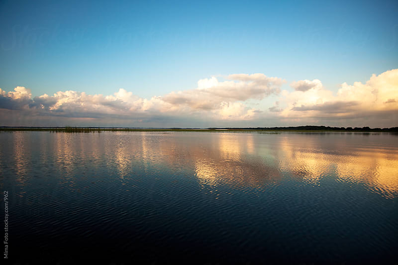 Quiet afternoon on the Everglades, Florida by Mima Foto for Stocksy United