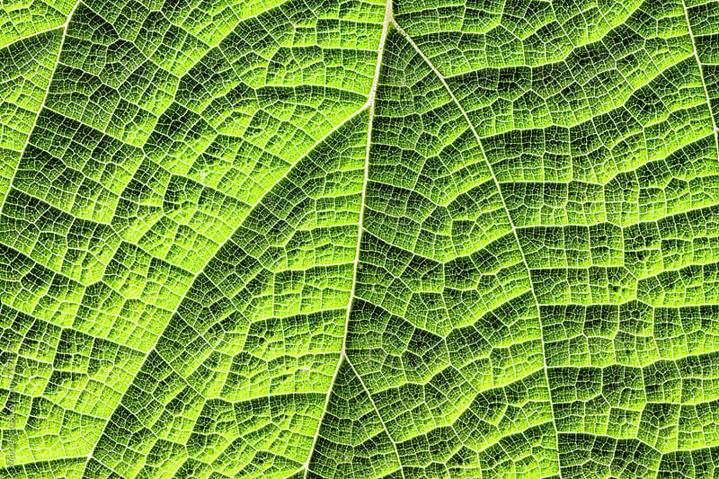 green leaf macro by Marcel for Stocksy United