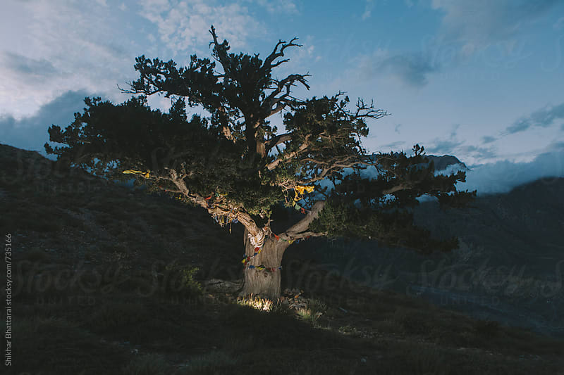 A religious fig tree atop a mountain in the Mustang. by Shikhar Bhattarai for Stocksy United
