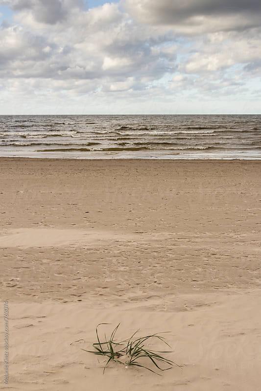 Beach grass at an empty beach by Melanie Kintz for Stocksy United