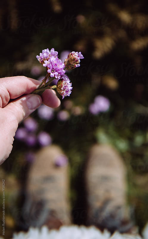 Hand holding Thrift flowers. Walking boots in the background. by Helen Rushbrook for Stocksy United