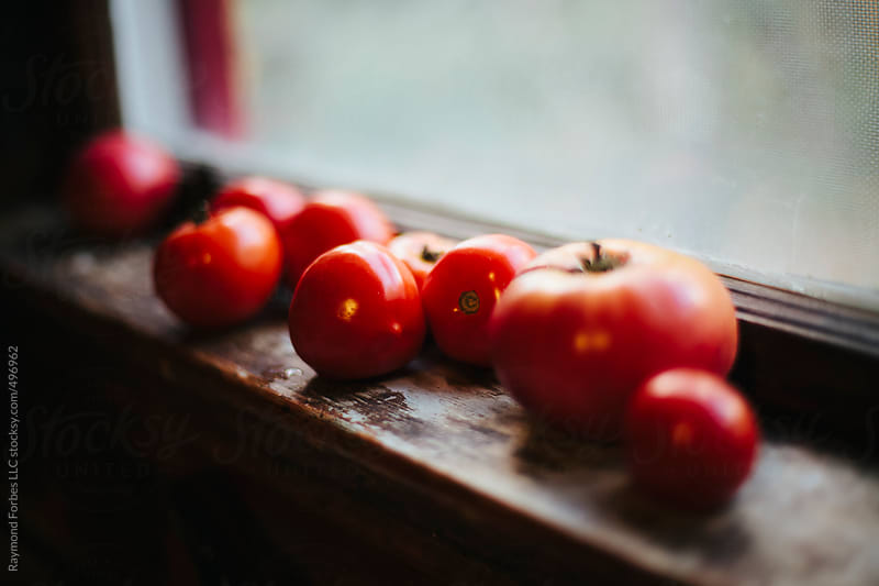 Tomatoes on Window Sill to Ripen by Raymond Forbes LLC for Stocksy United