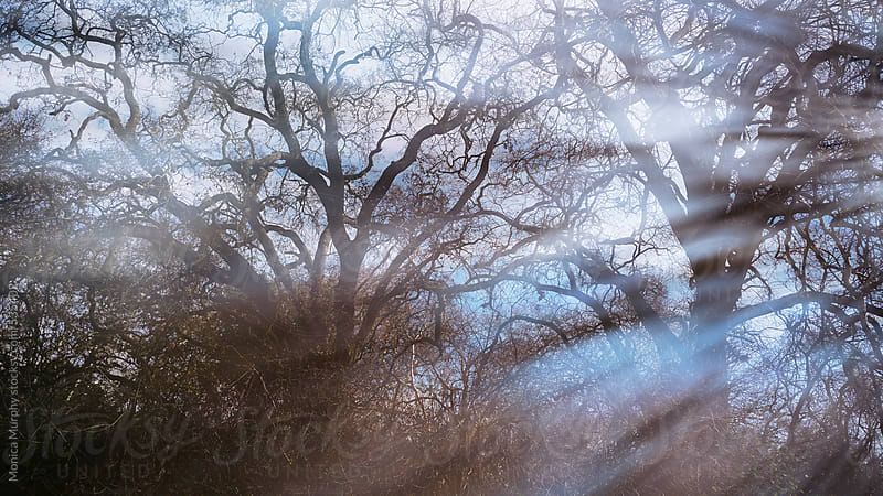Large bare tree branches with rays coming through by Monica Murphy for Stocksy United
