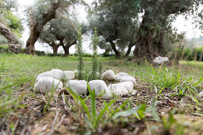 italian countryside by Tommaso Tuzj for Stocksy United