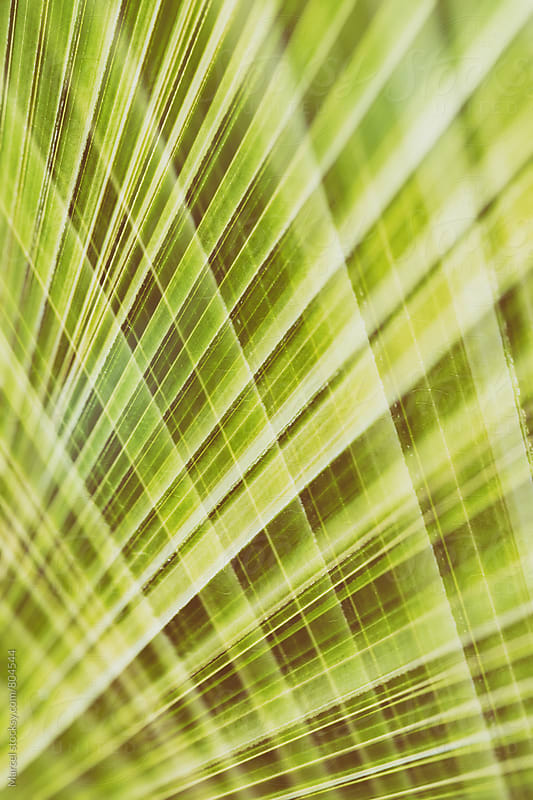 palm leaf double exposure by Marcel for Stocksy United