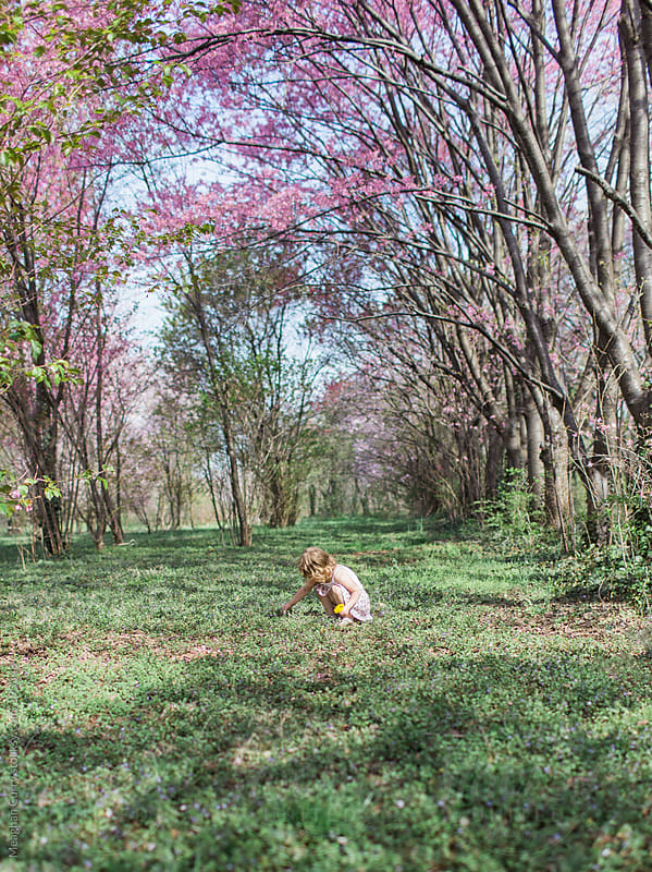 little girl picking flowers under spring blooms by Meaghan Curry for Stocksy United