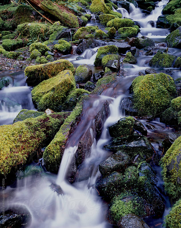 mountain stream Olympic National Park, Washington in early summer by Ron Mellott for Stocksy United