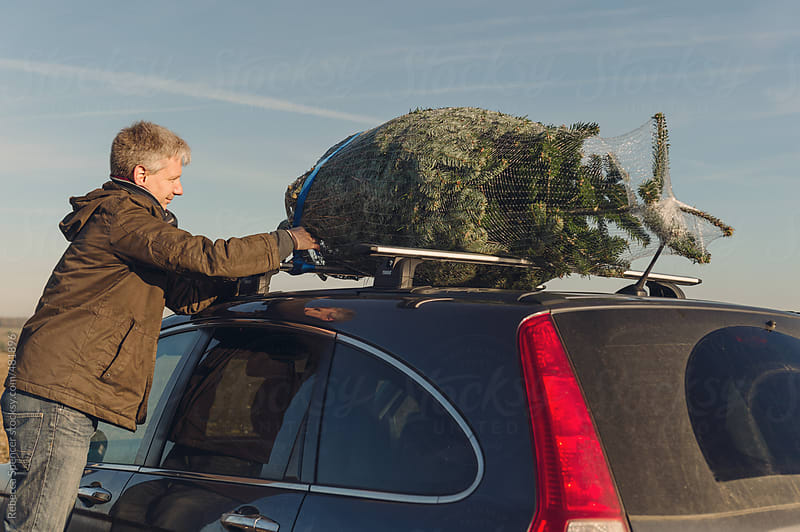 Netted Christmas tree being tied to car roof by Rebecca Spencer for Stocksy United