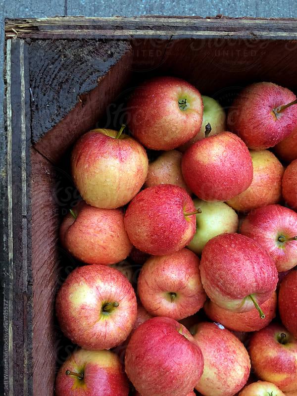 Fresh Apples Wet from Rain by Studio Six for Stocksy United