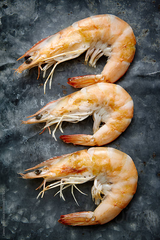 Three large cooked prawns by James Ross for Stocksy United