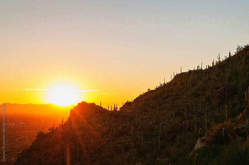 Sunset Over Mountains With Saguaro Cactus by Tamara Pruessner for Stocksy United
