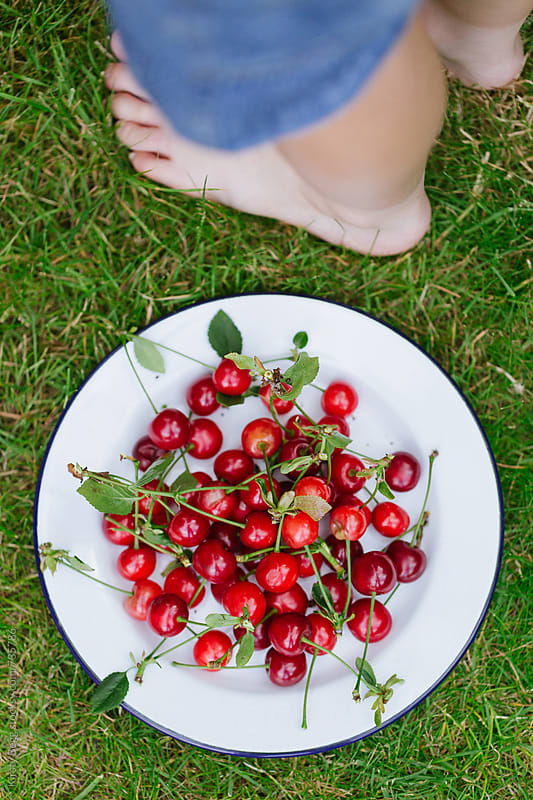 Plate of freshly harvested Morello cherries with child's feet, taken overhead by Kirsty Begg for Stocksy United