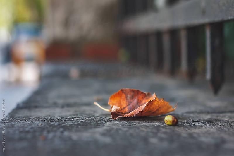 Fallen Autumn Leaf by Helen Sotiriadis for Stocksy United