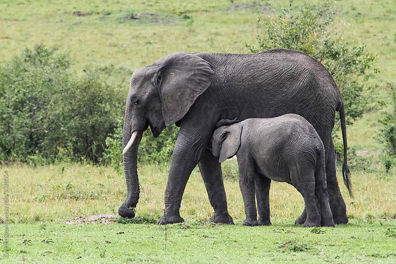 Elephant by Gabriel Ozon for Stocksy United