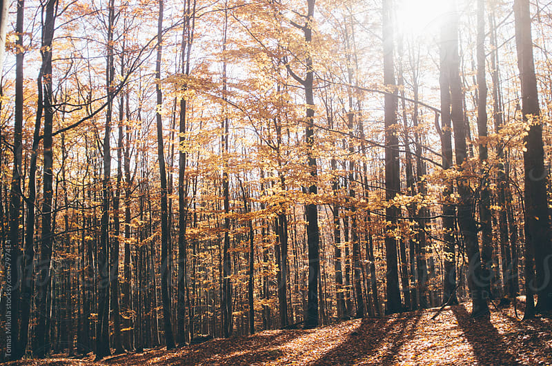 Forest during fall by Tomas Mikula for Stocksy United