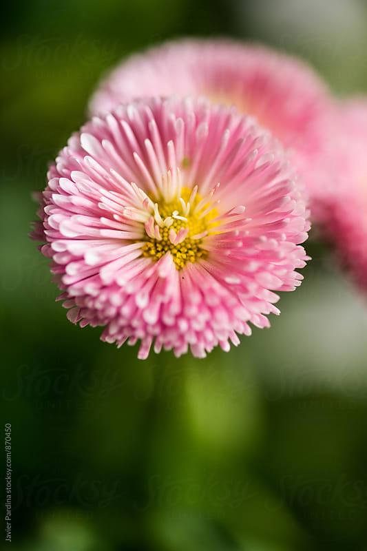 macro details of flowers  by Javier Pardina for Stocksy United