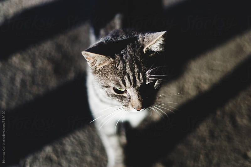 A cat in the afternoon sun by Natasa Kukic for Stocksy United
