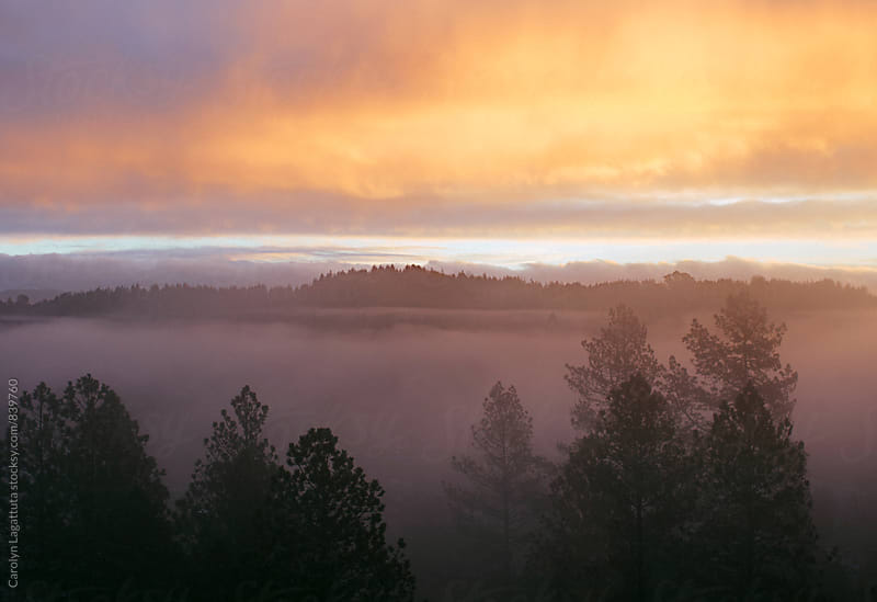 Sunrise with fog and trees  by Carolyn Lagattuta for Stocksy United